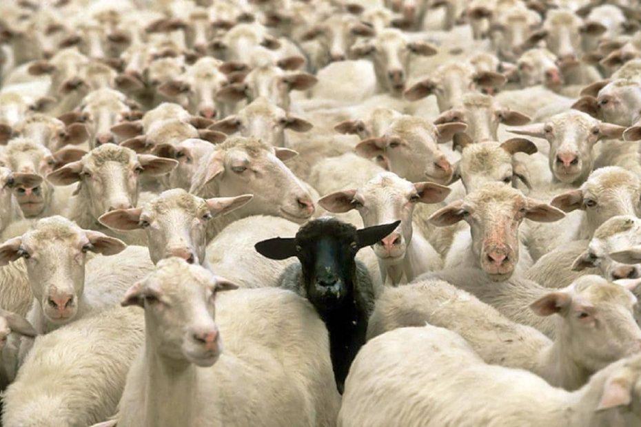 Sei una pecora o un ribelle